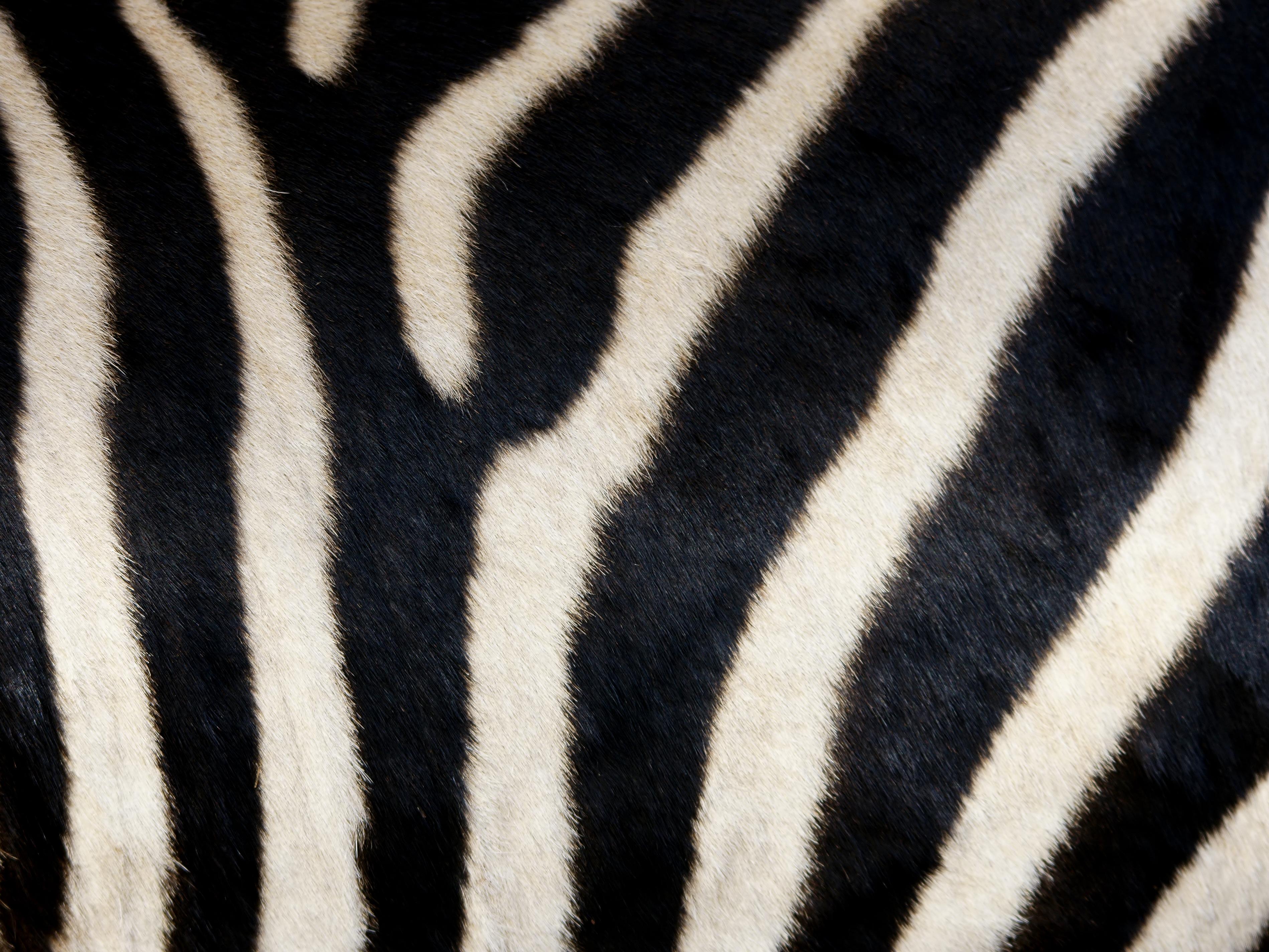 Equus_quagga_boehmi_(skin).jpg